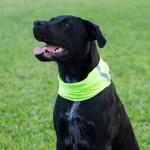 Reflective Electric Yellow Dog Shield